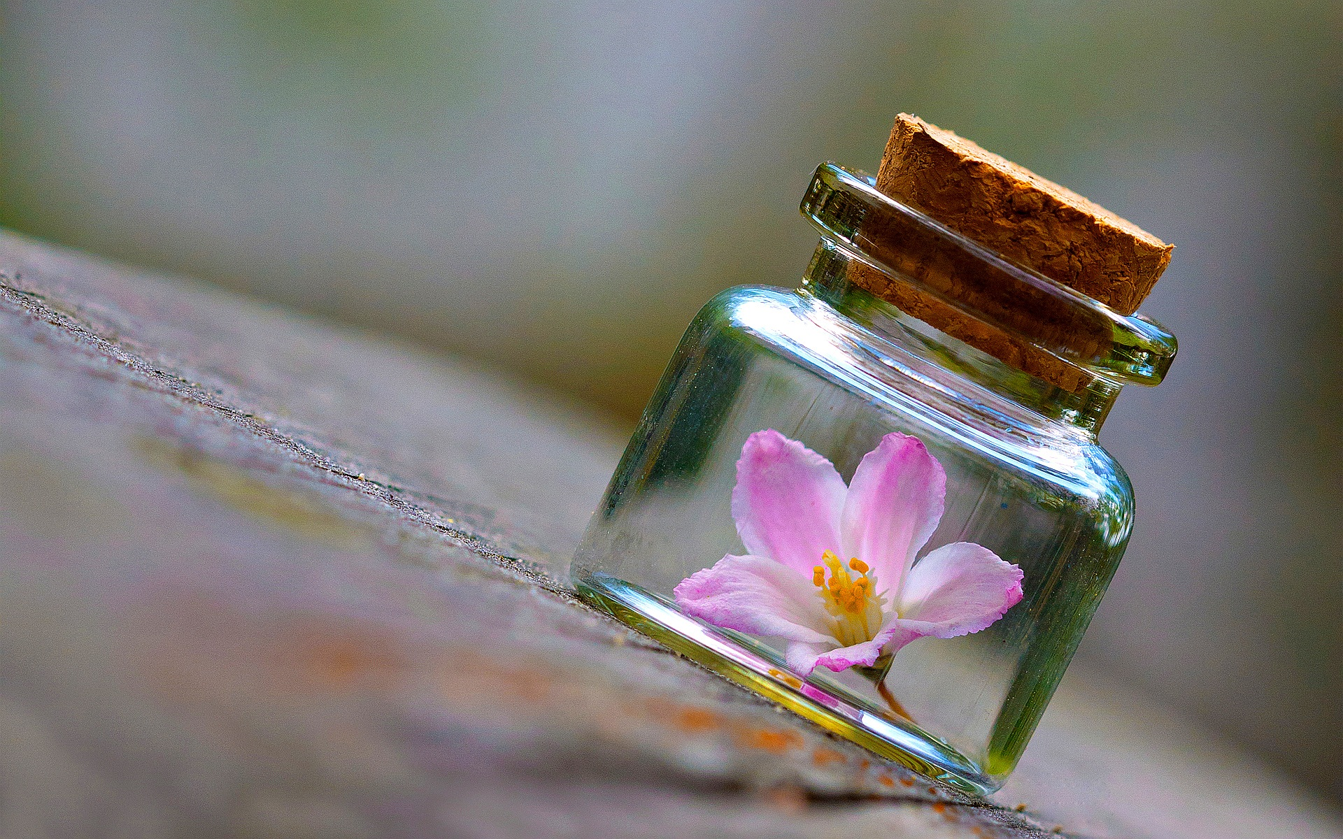Pink Flower Bottle Wallpapers Pictures Photos Images. «