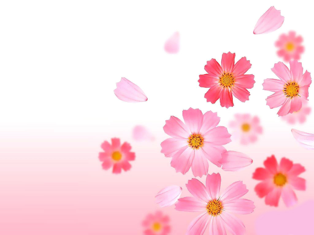 Pink Flower Background Pictures 05 Wallpaper, free pink flower background pictures images, pictures download