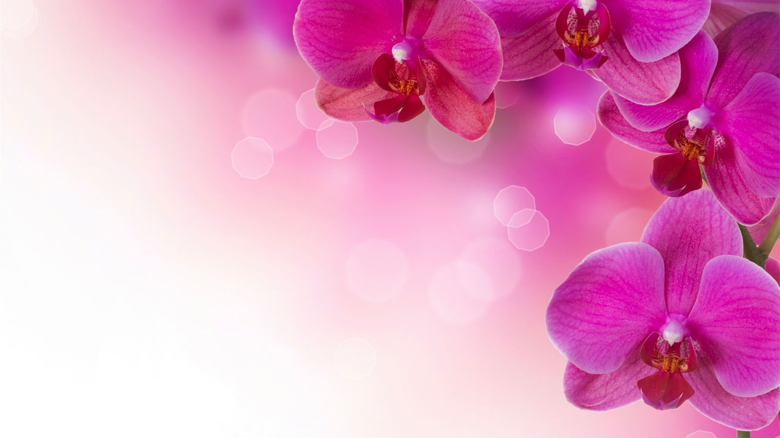 Image for pink flowers background