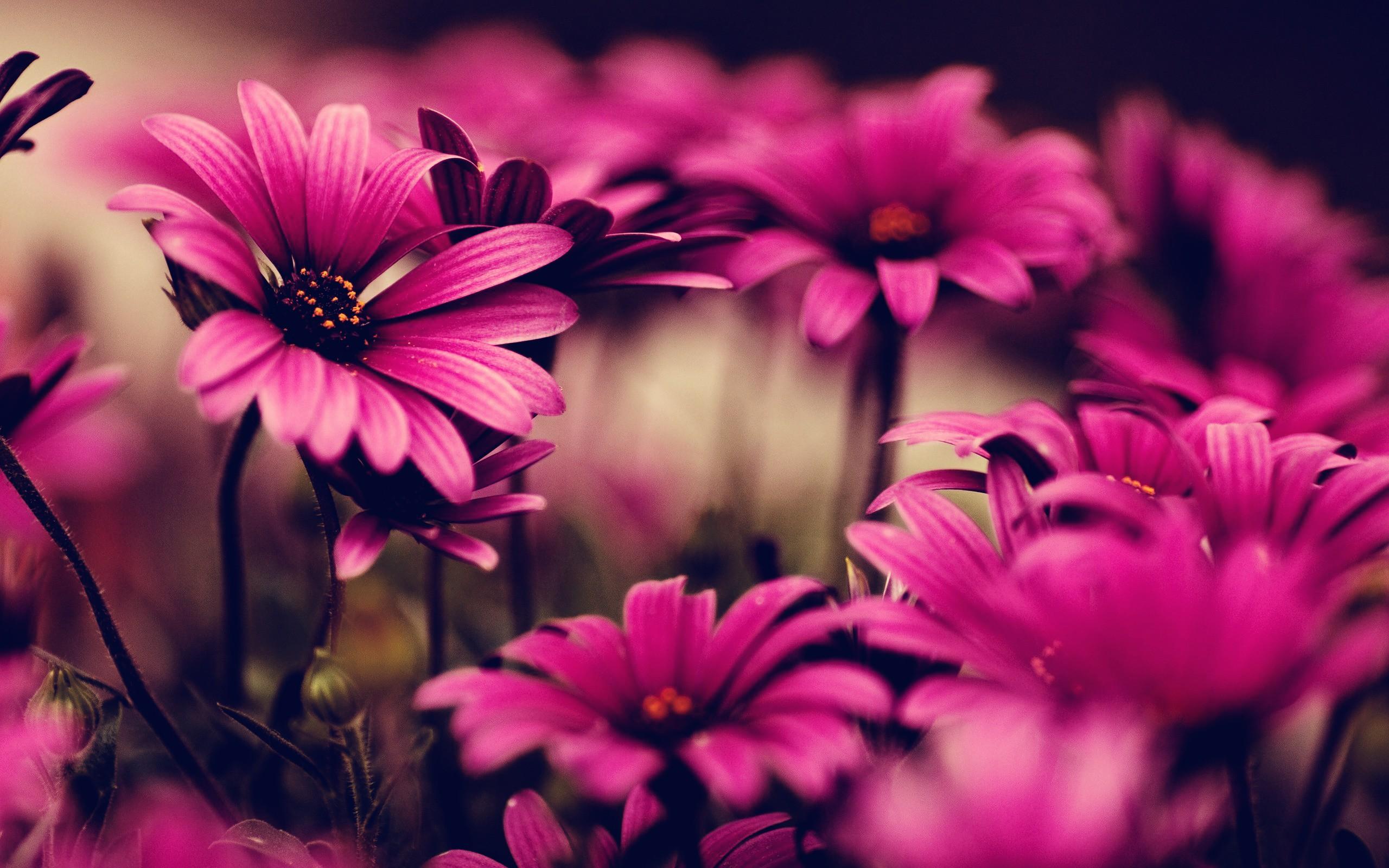 ... Pink Flowers Wallpaper HD