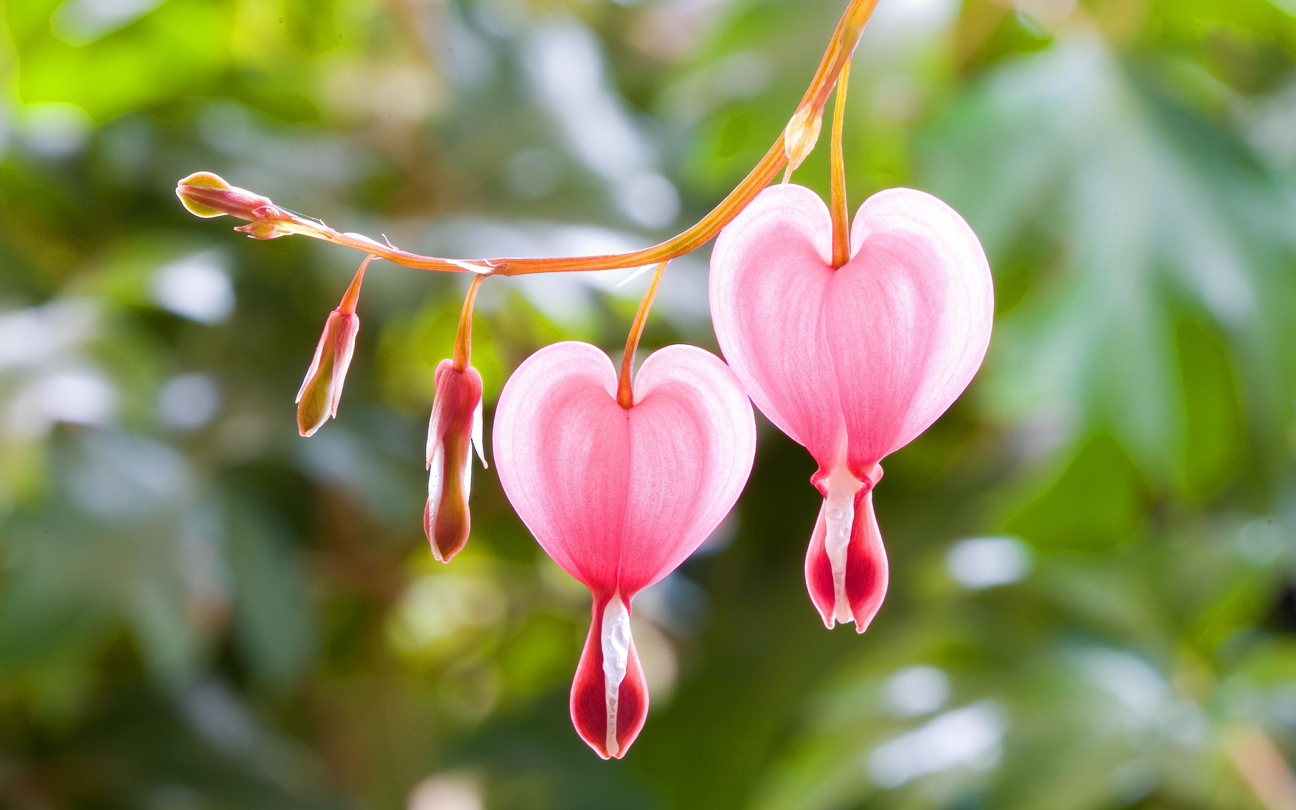 Pink heart flowers
