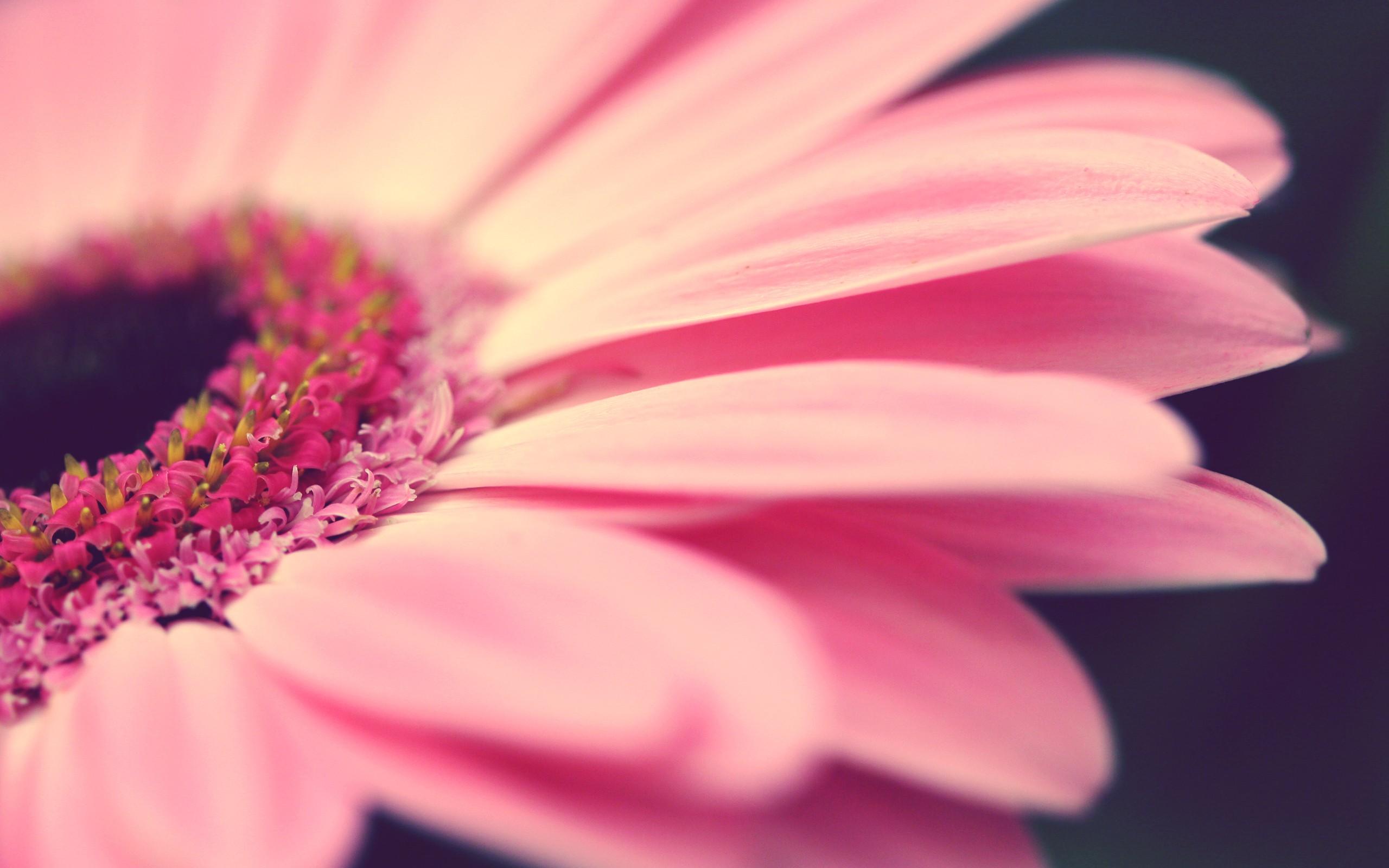 Pink Macro 37841 1920x1200 px