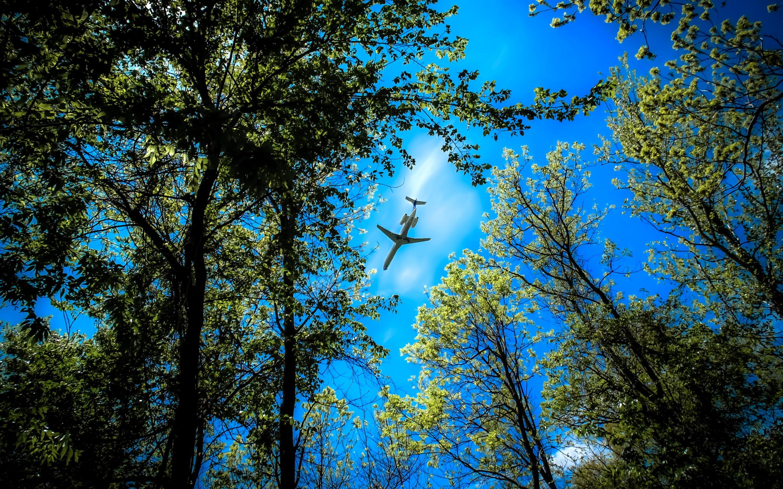 Plane between trees