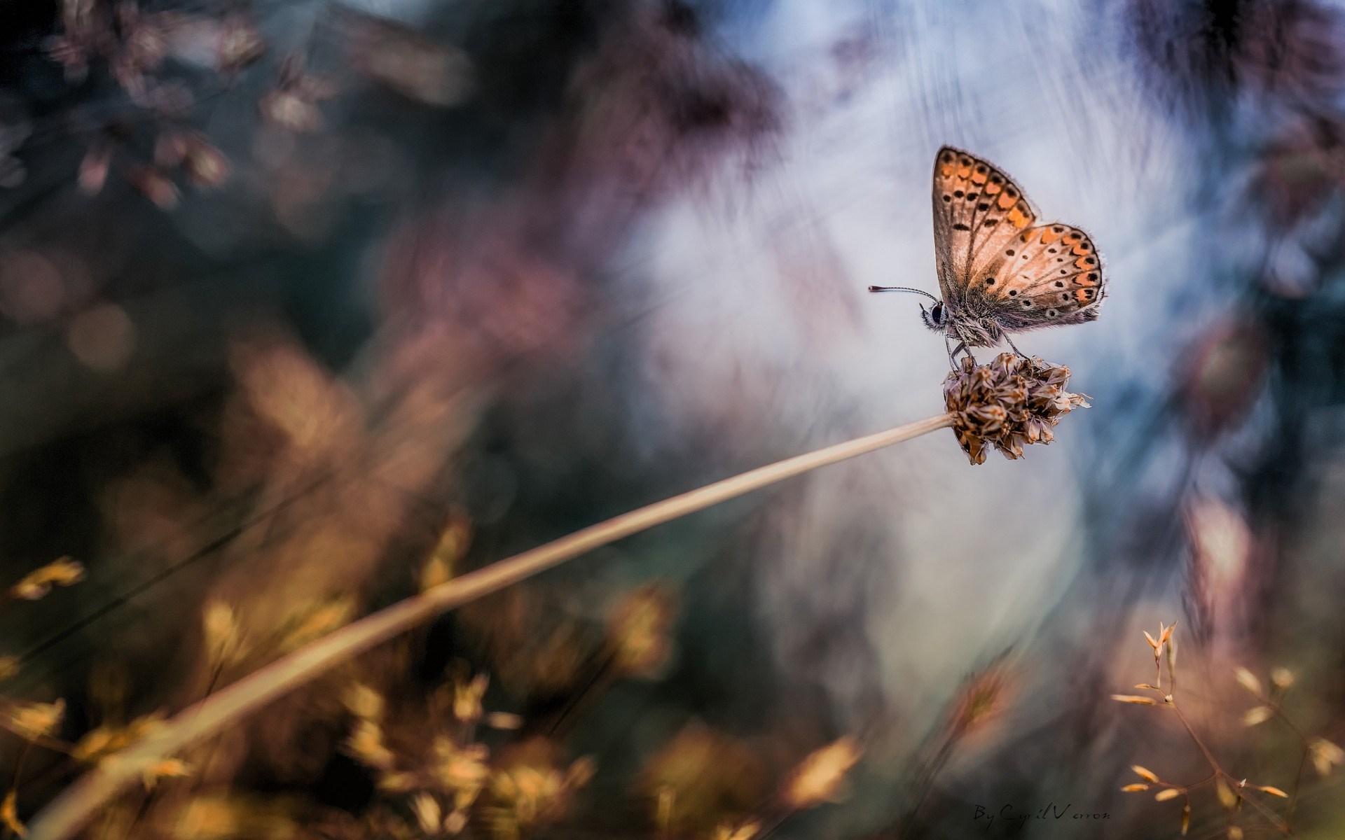 Plant Butterfly Macro Bokeh