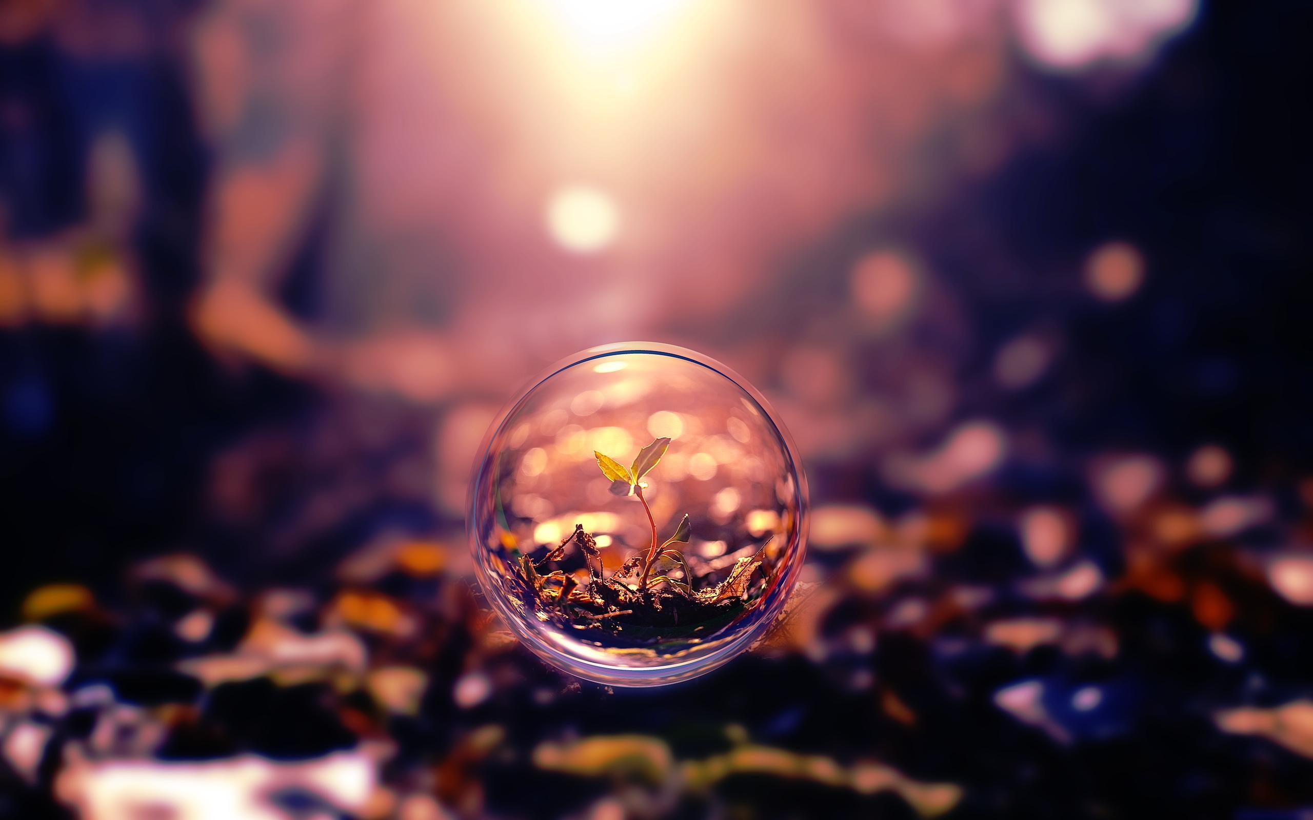 Plant in bubble