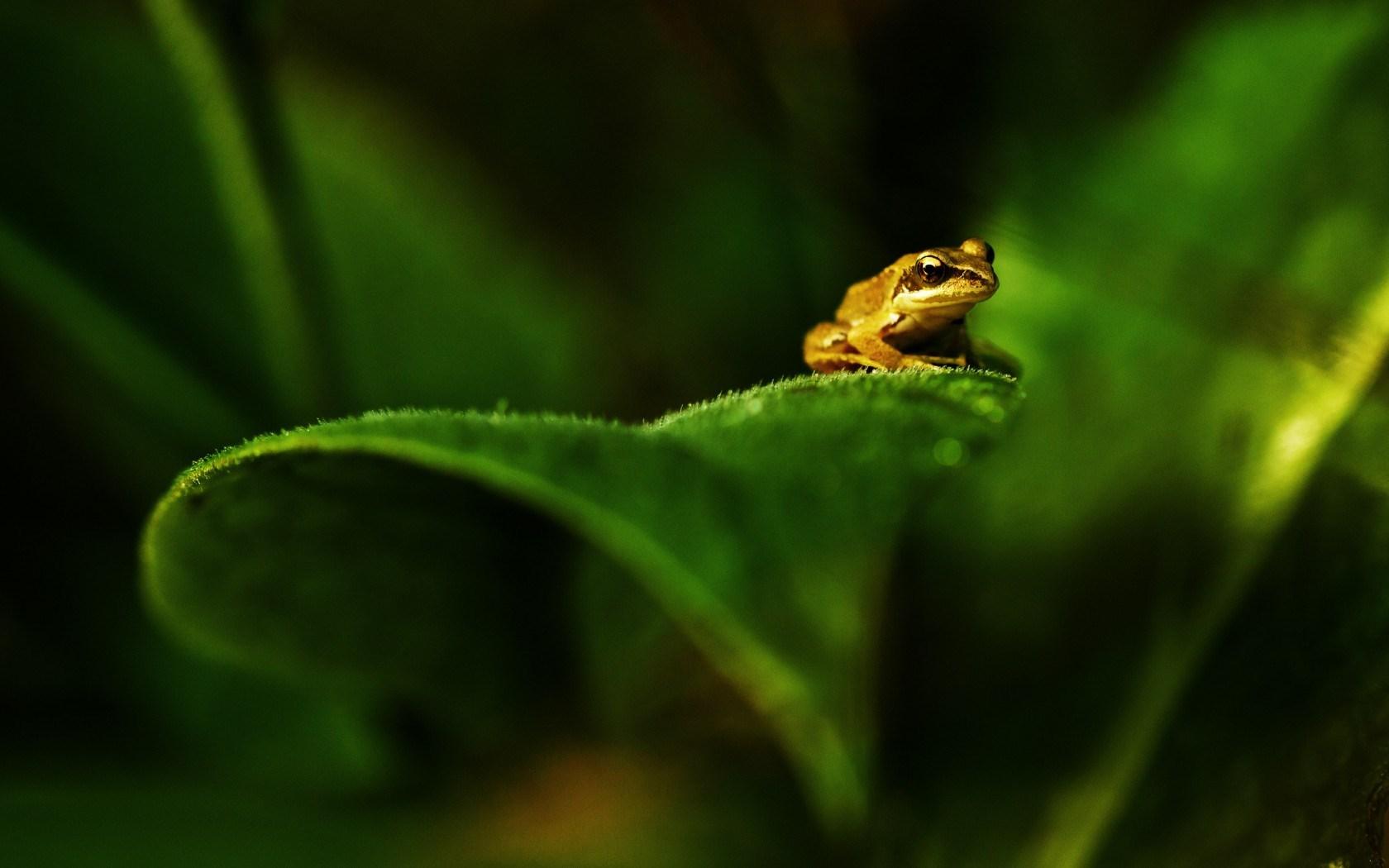 Plant Leaf Green Frog