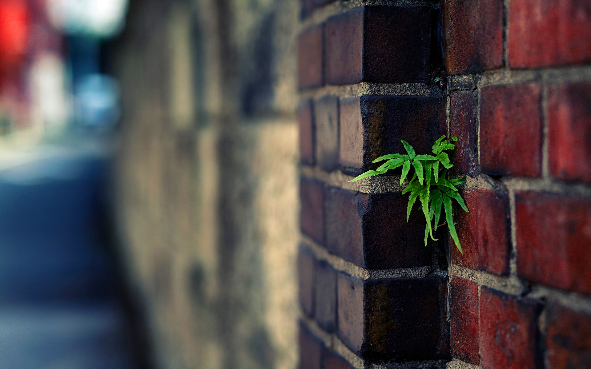 Plant urban brick wall