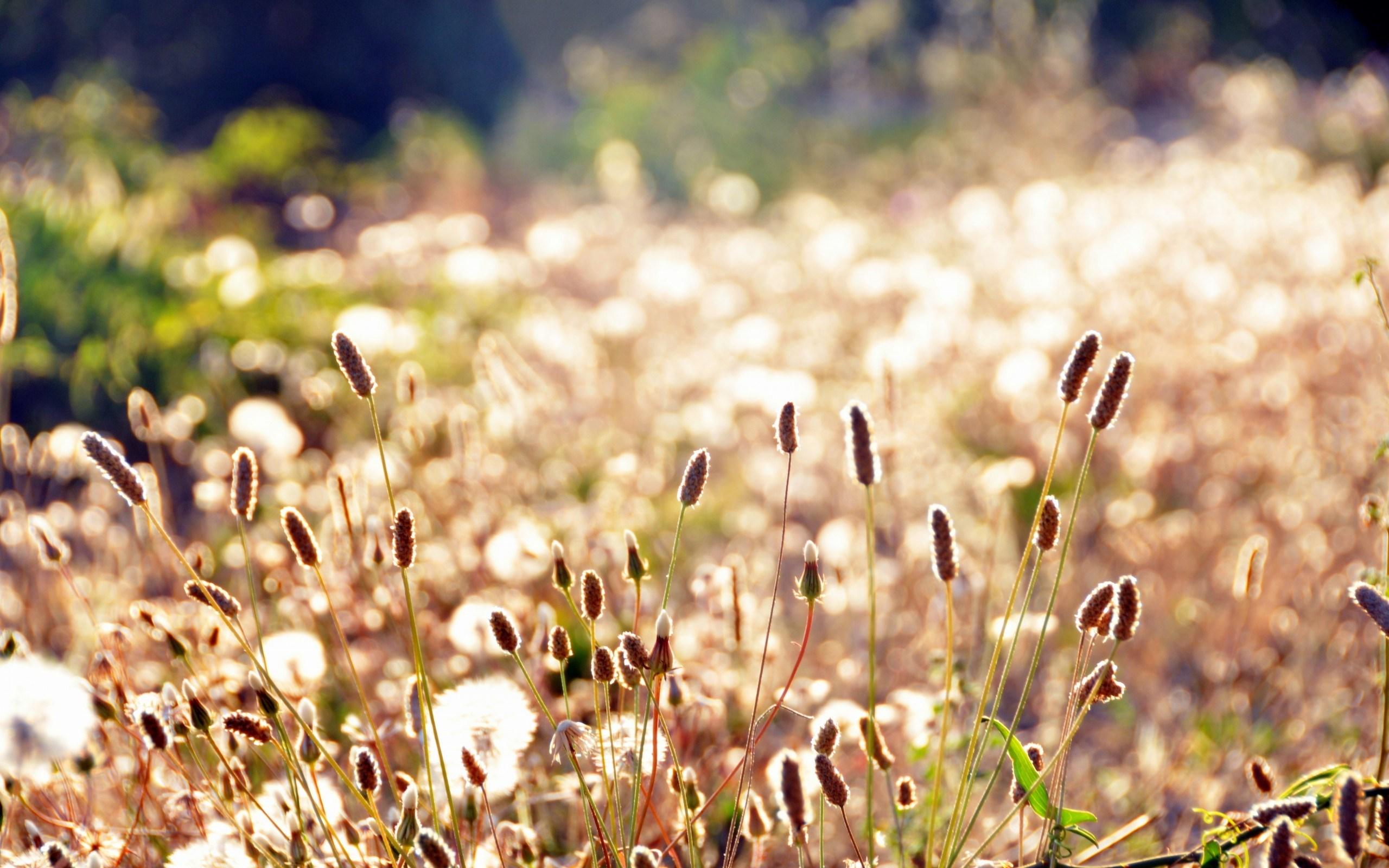Plants Grass Meadow Field Summer Macro