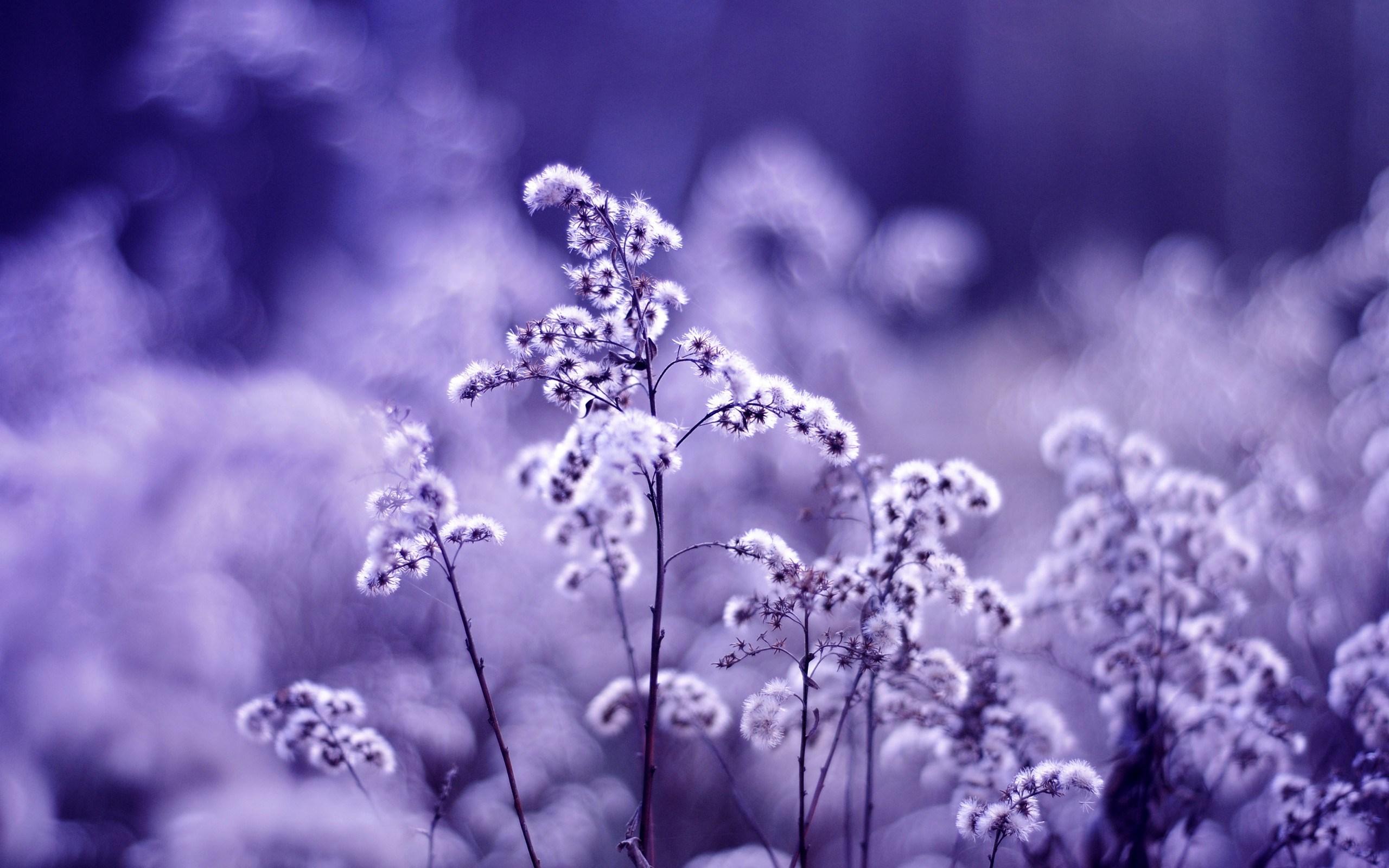 Plants Nature Macro
