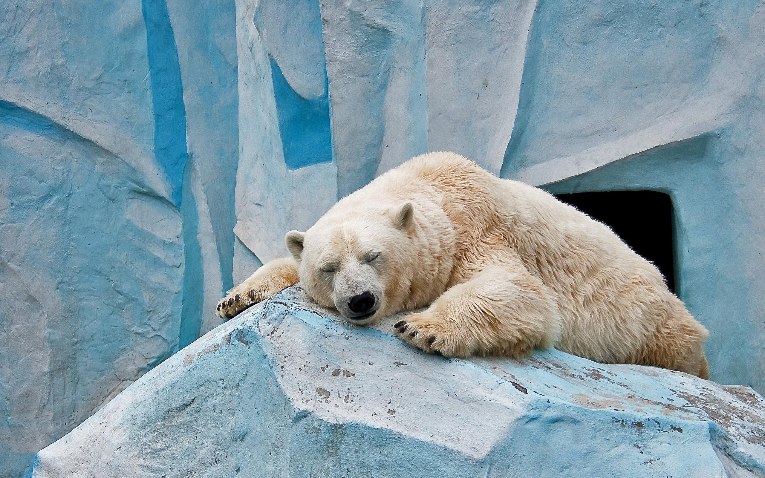 ... Polar Bear Wallpaper ...