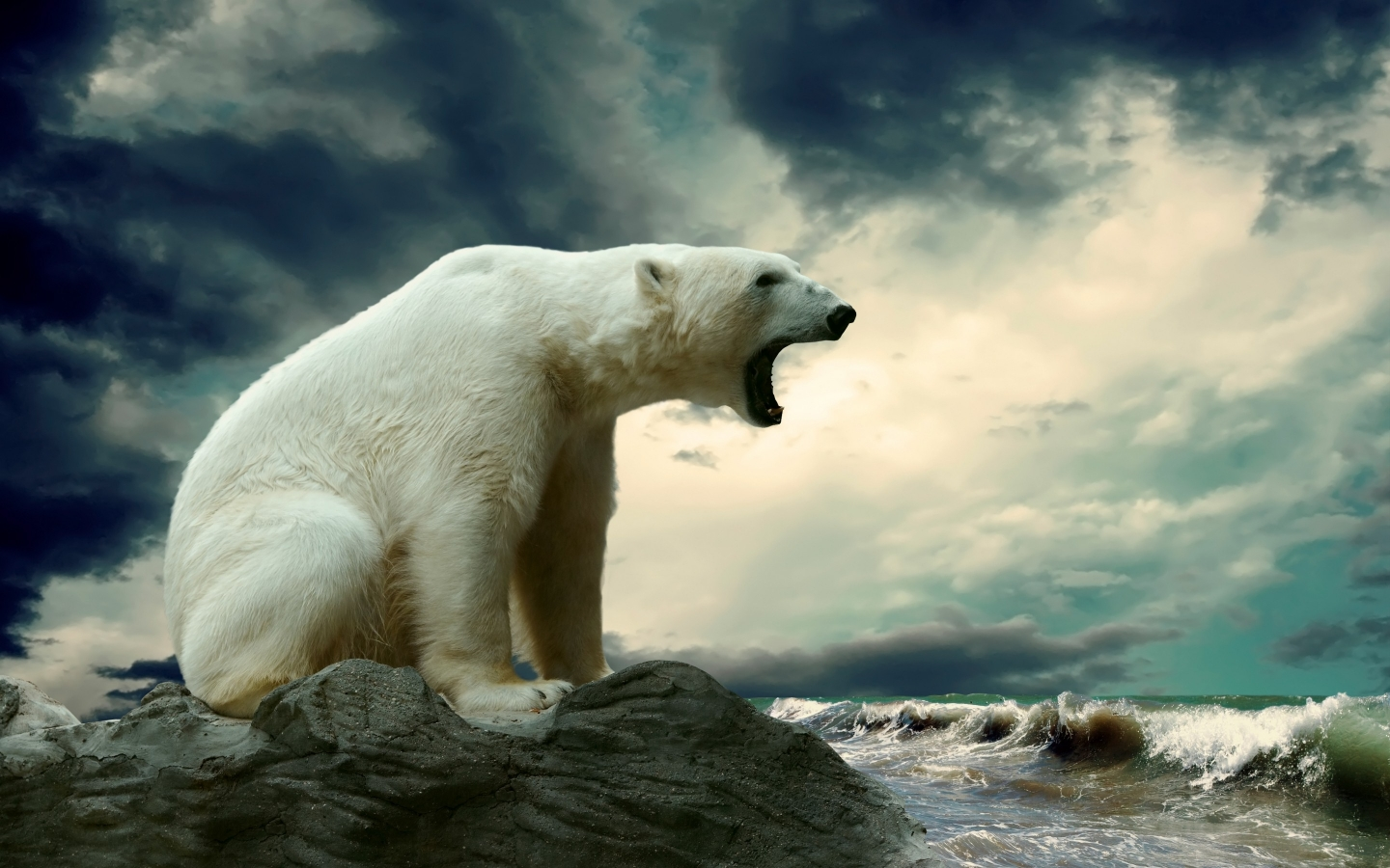 Pollution lowers polar bear penile bone density, threatening their mating abilities