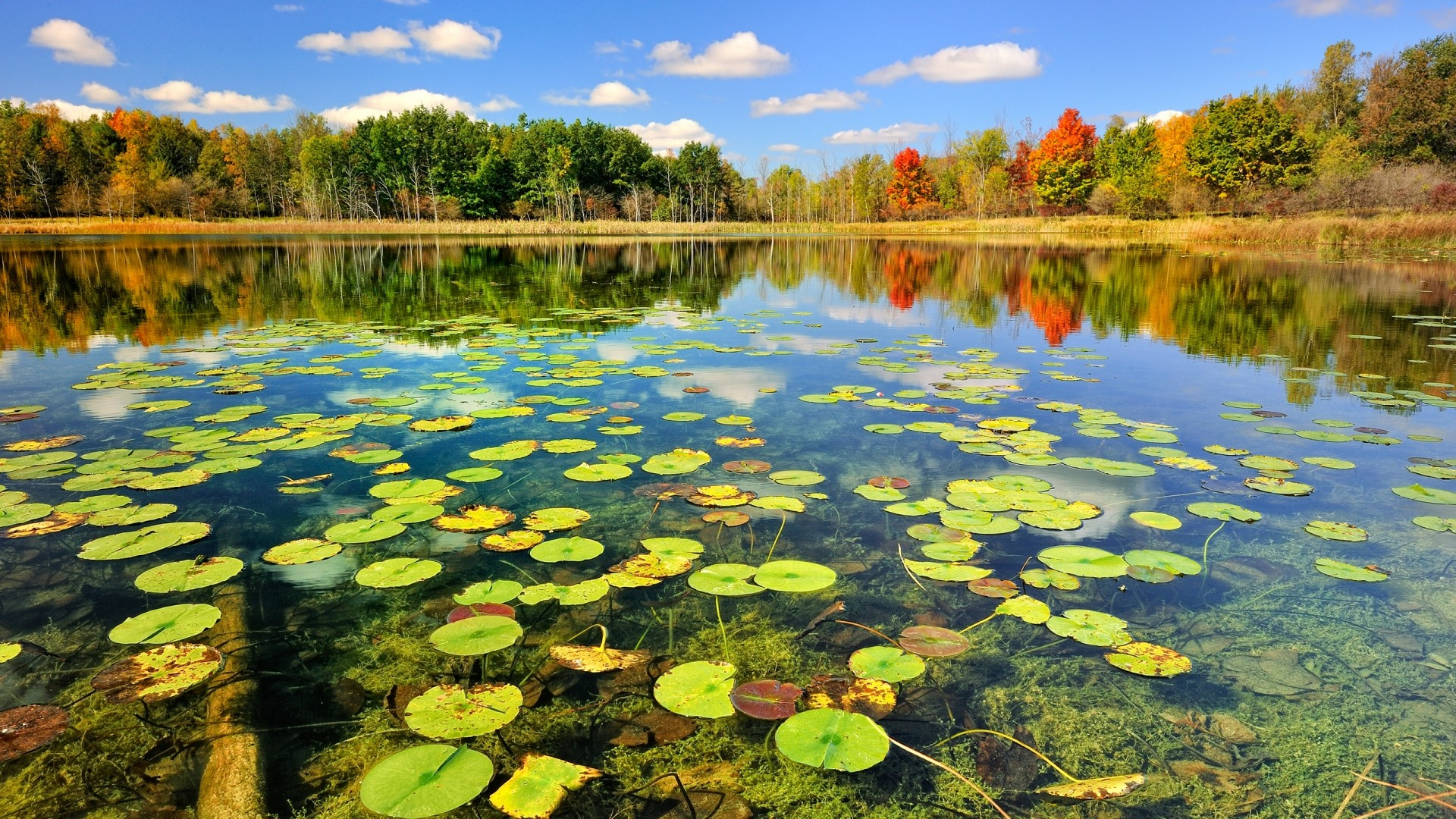 Pond Background 29694