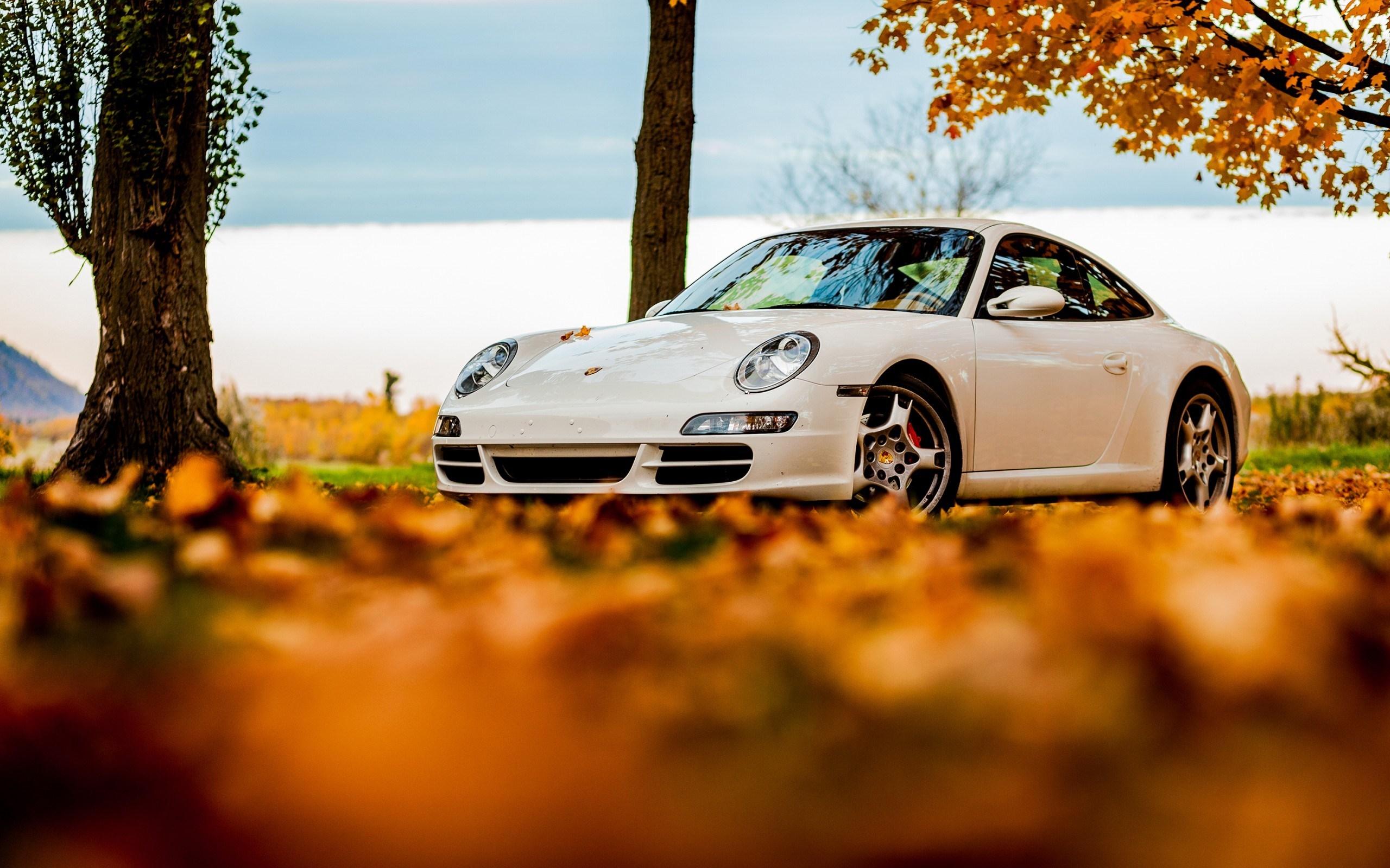 Porsche 911 White Autumn
