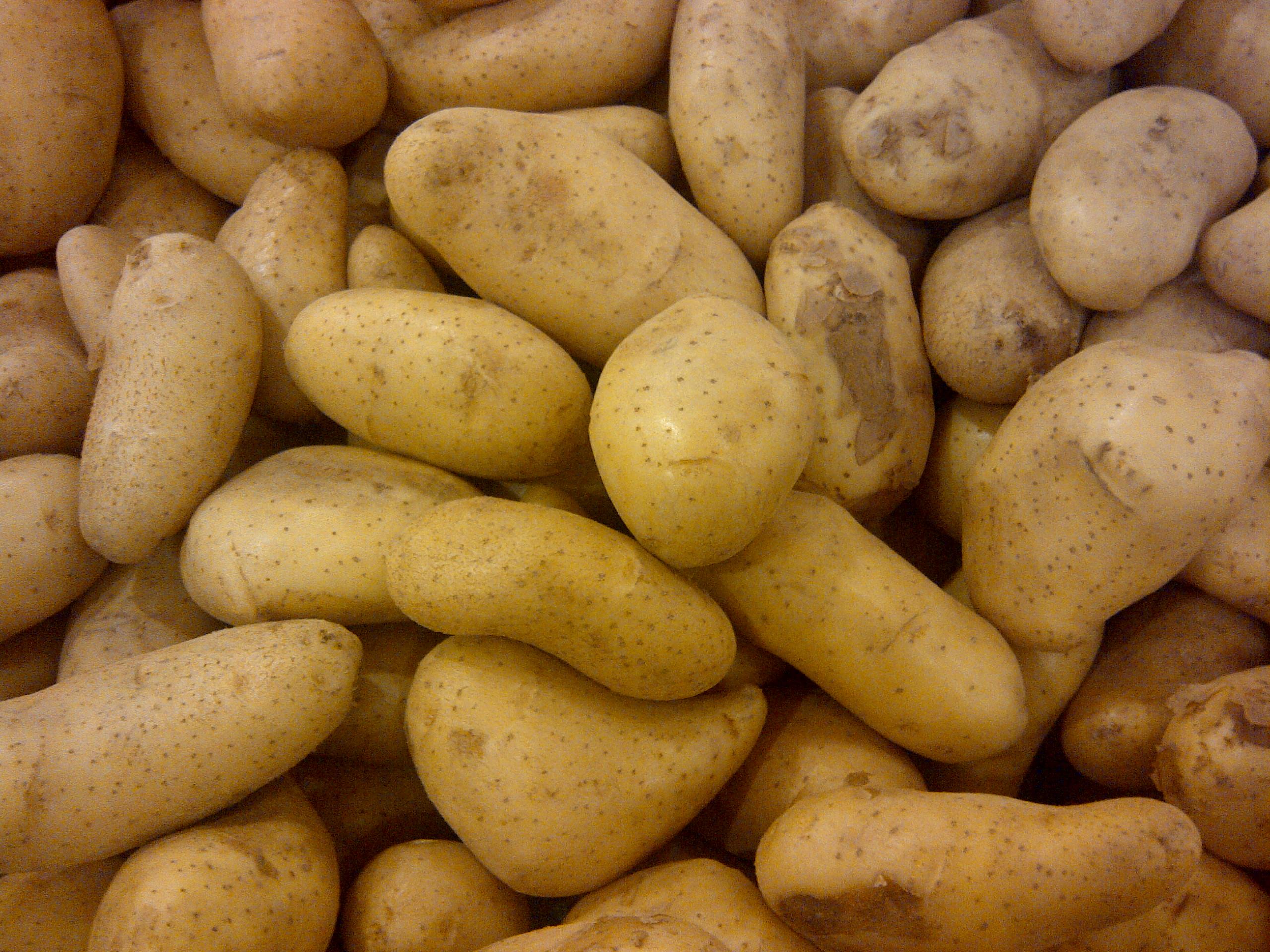 File:Potato 123.jpg