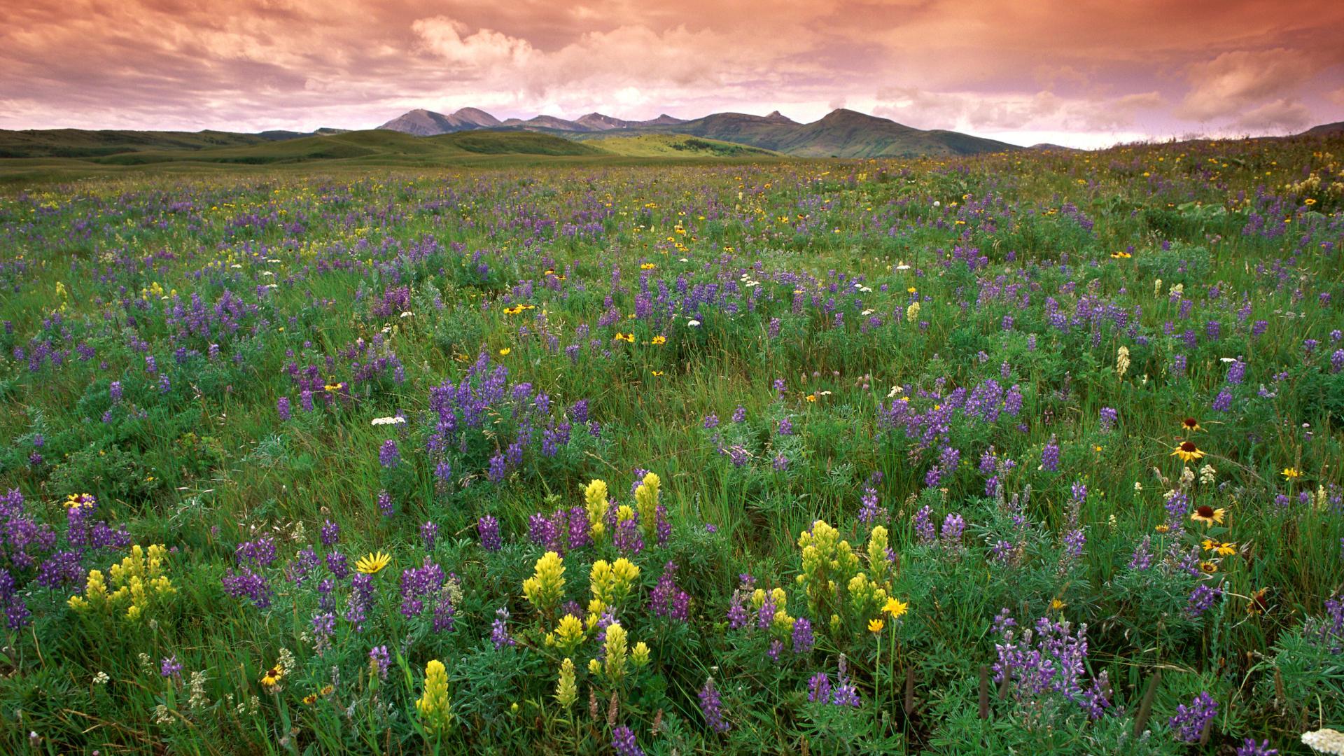 Prairie Background 32998