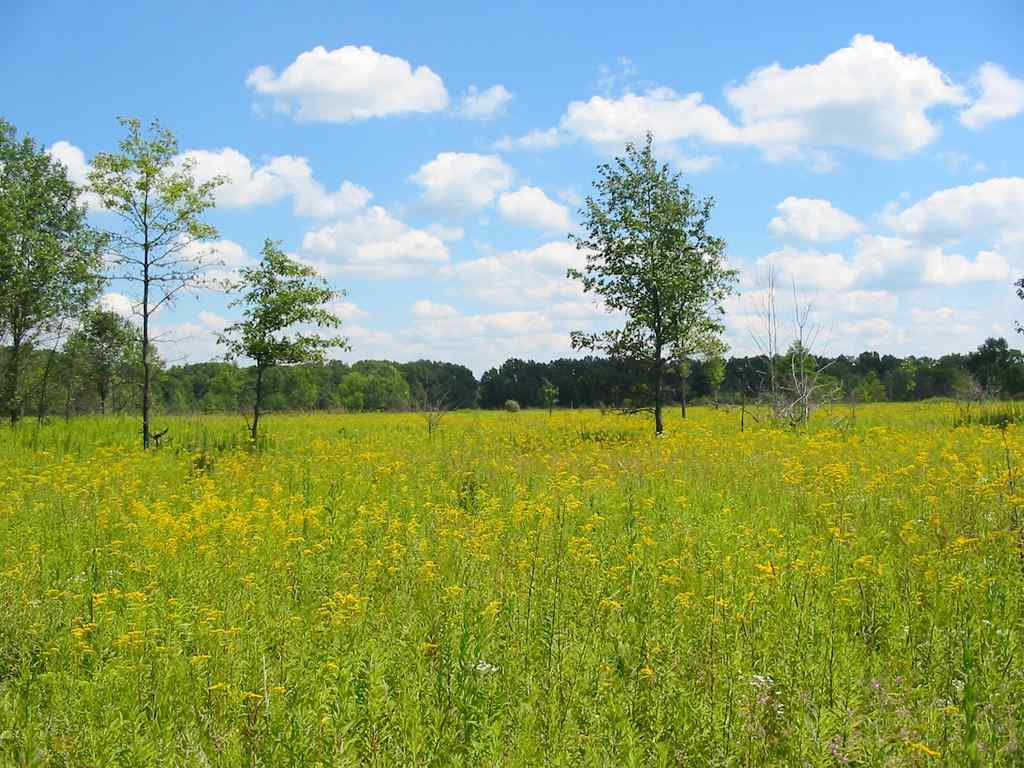 The Mnoké Prairie is an a lovely swath of restored grassland.