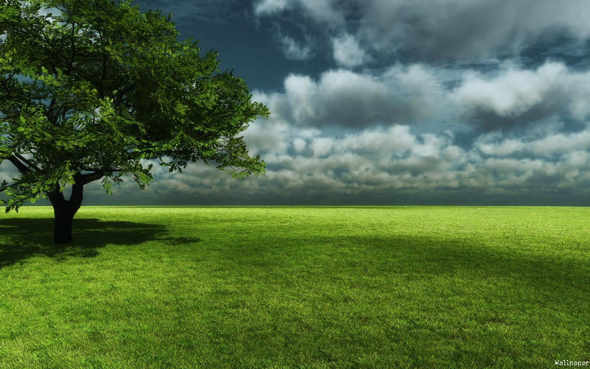 Hd Wallpapers Tree On The Prairie Wallpaper 1920x1200px