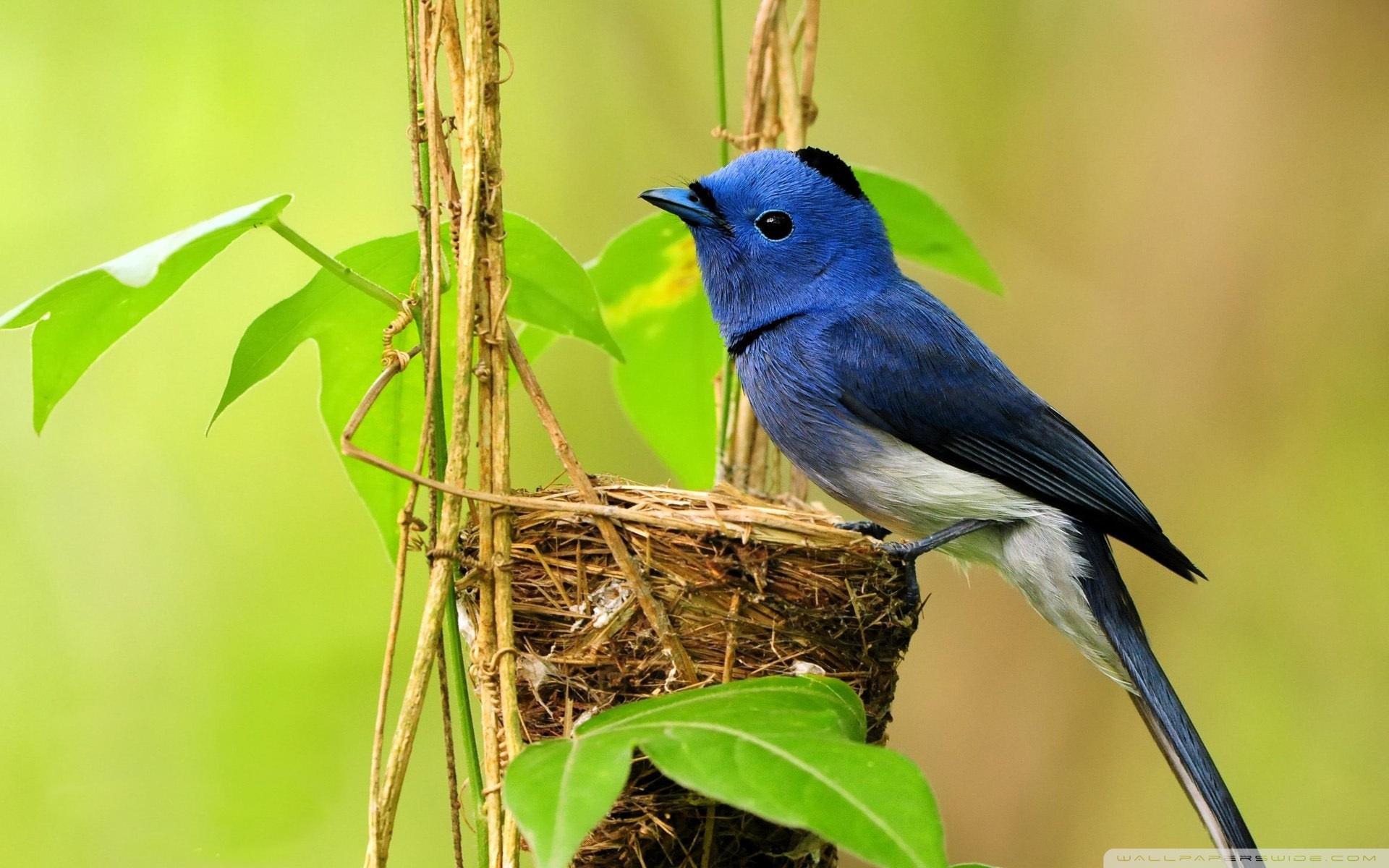 Pretty Blue Bird Wallpaper