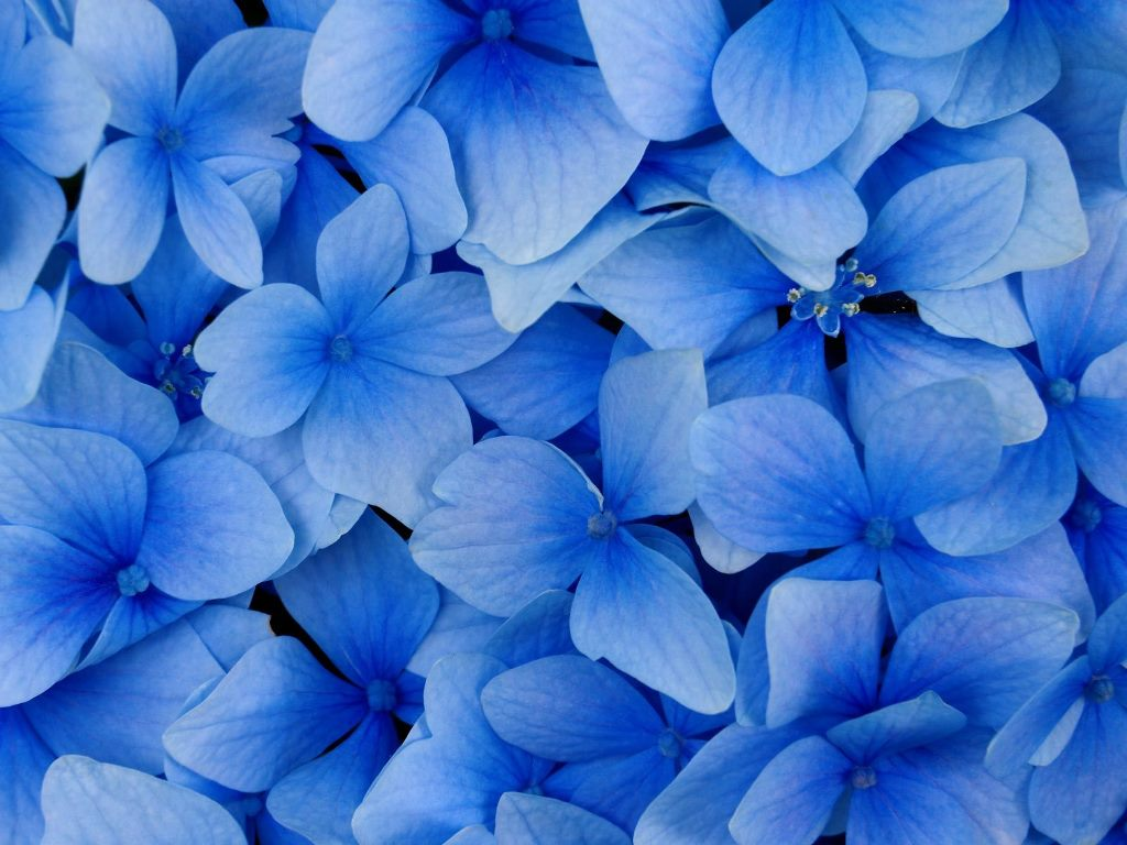 Pretty Blue Flower Wallpaper