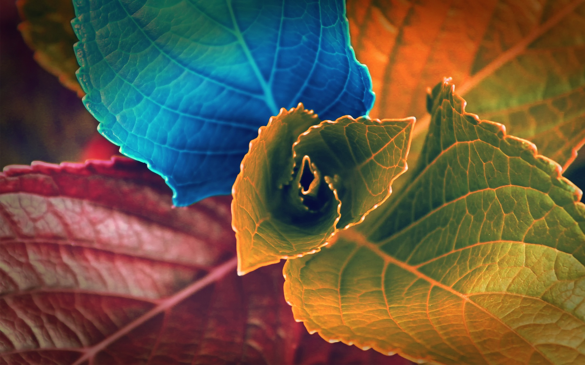 Pretty Colorful Leaves 30089 1920x1200 px
