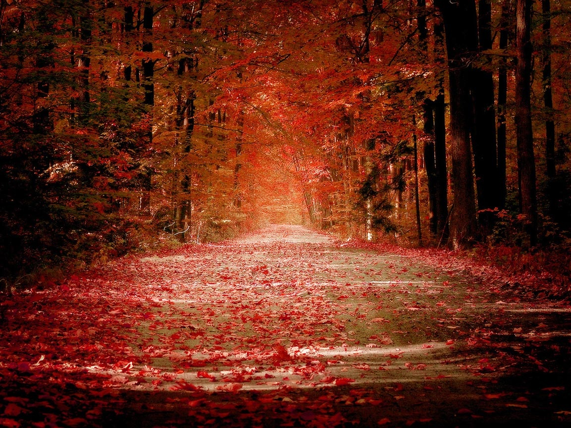 Pretty Fall Background 42070 2560x1600 px