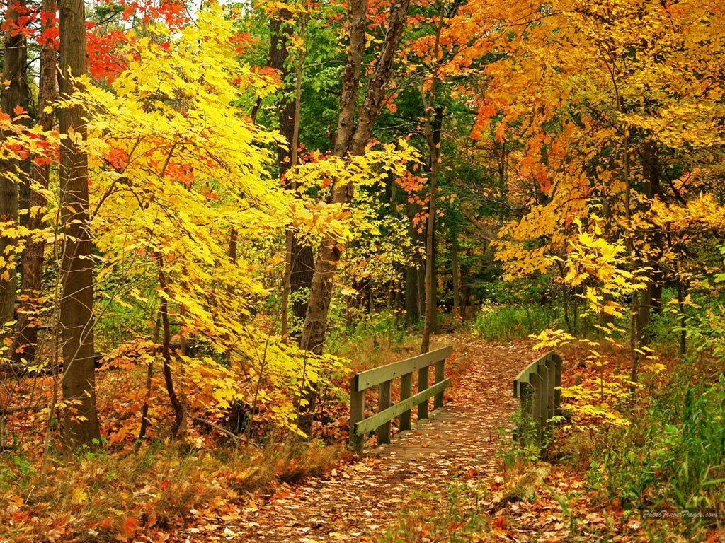 Pretty Fall Wallpaper