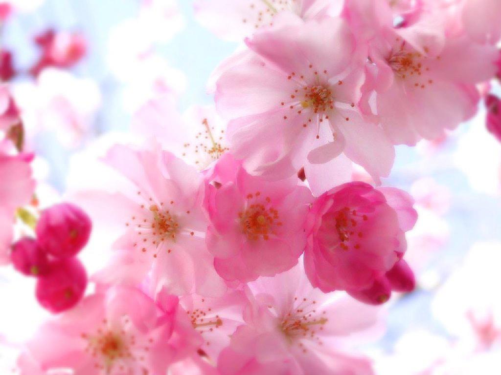 ... pretty-flower-wallpaper ...