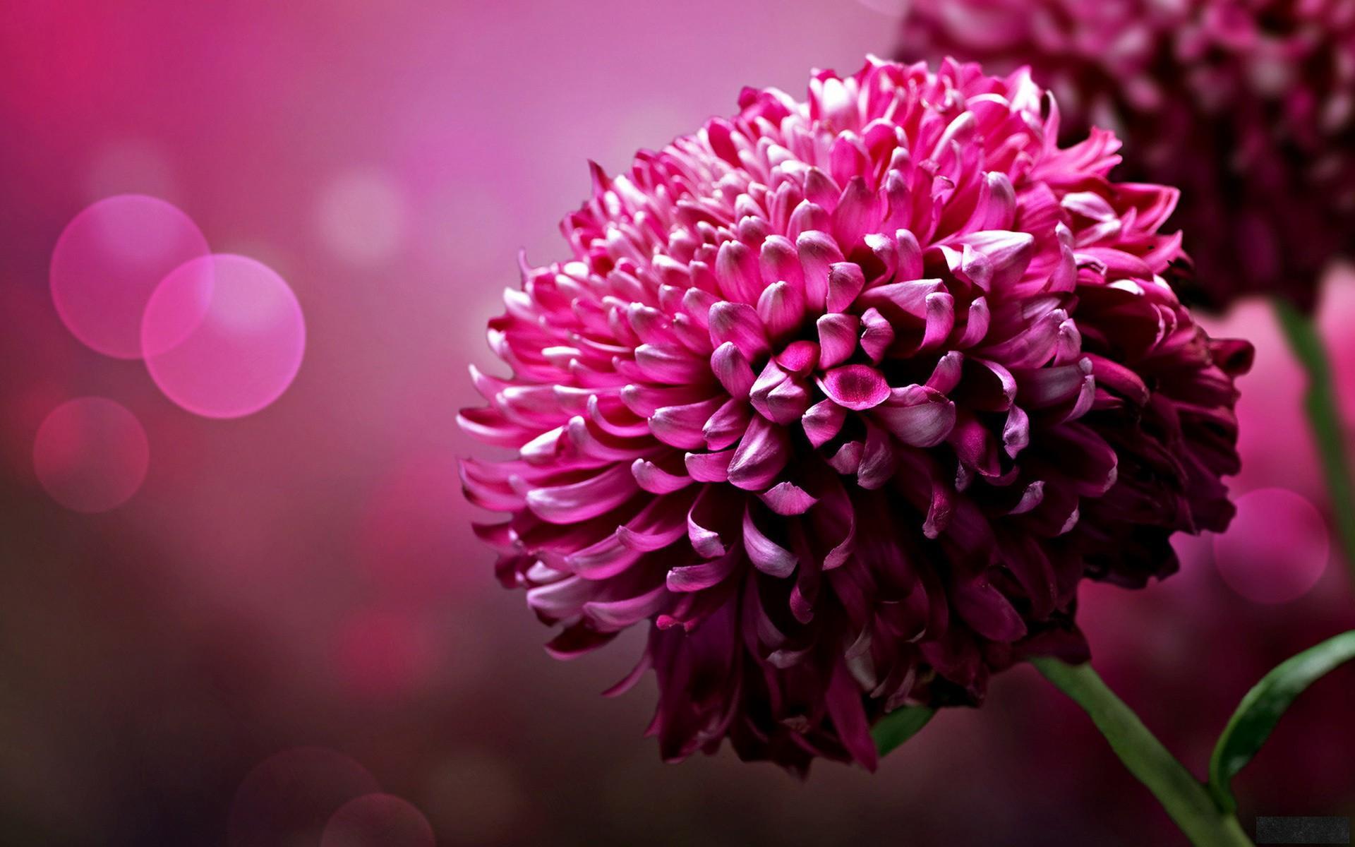 Pretty Flower HD wallpapers