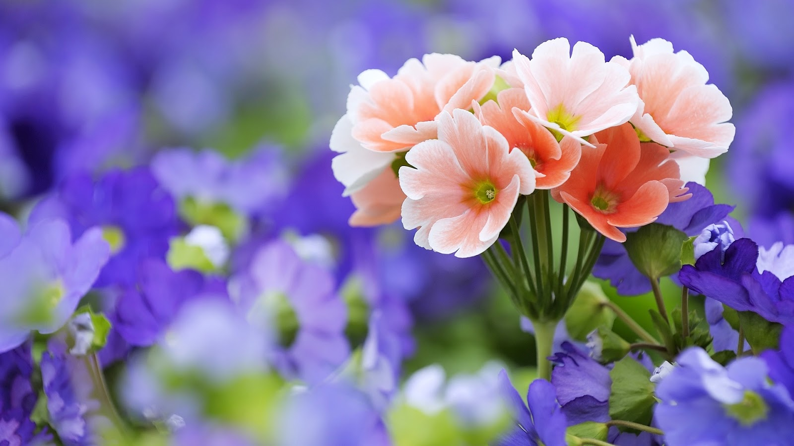 Pretty Flowers Wallpaper