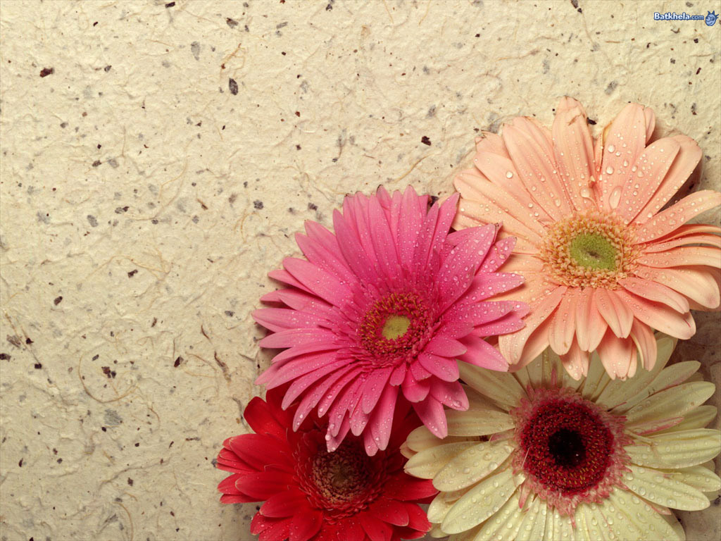 pretty-ness! - flowers Wallpaper