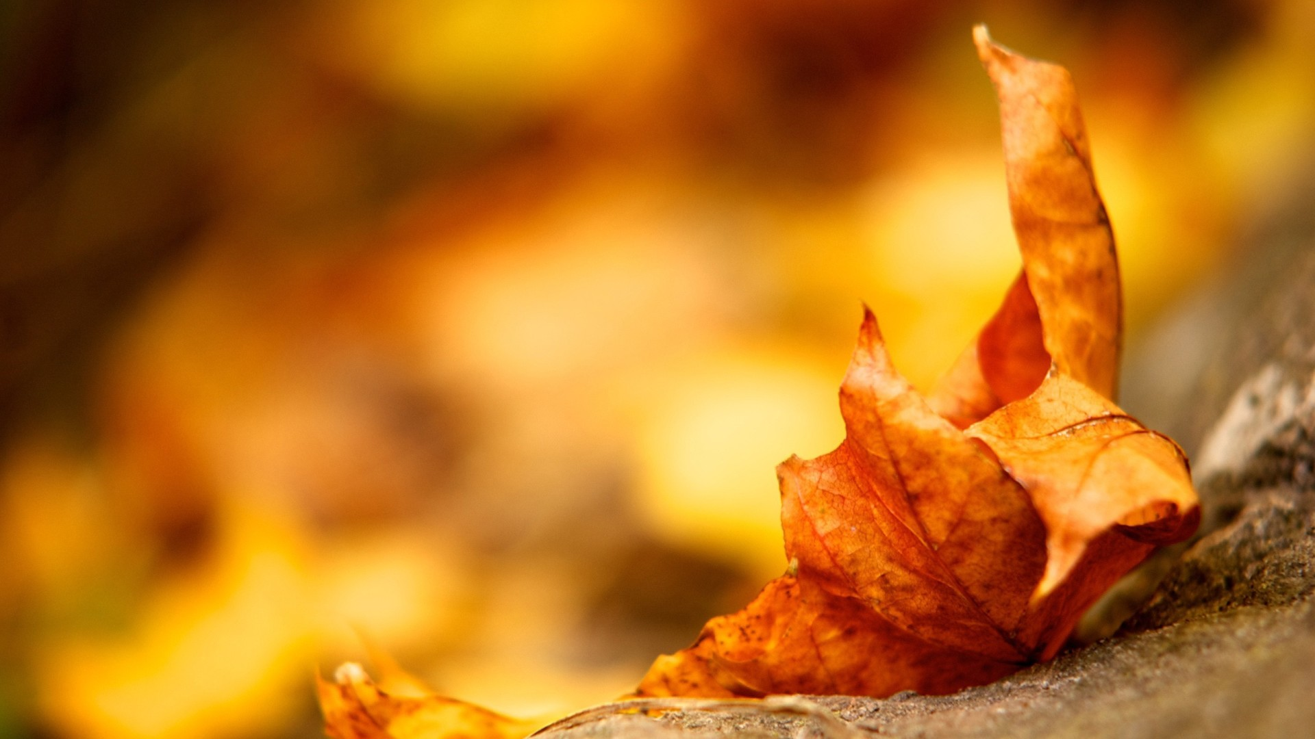 Pretty Leaves Macro Wallpaper 39026 1920x1200 px