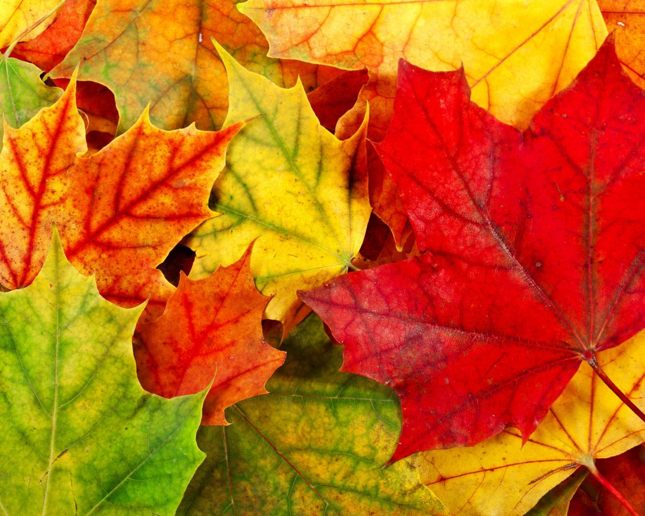 Pretty Leaves Wallpaper
