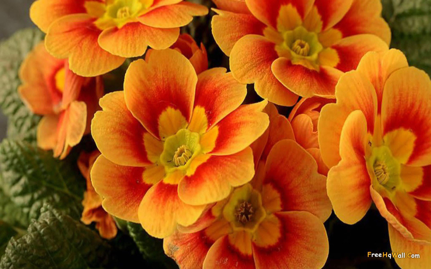 Pretty Orange Flowers Wallpaper
