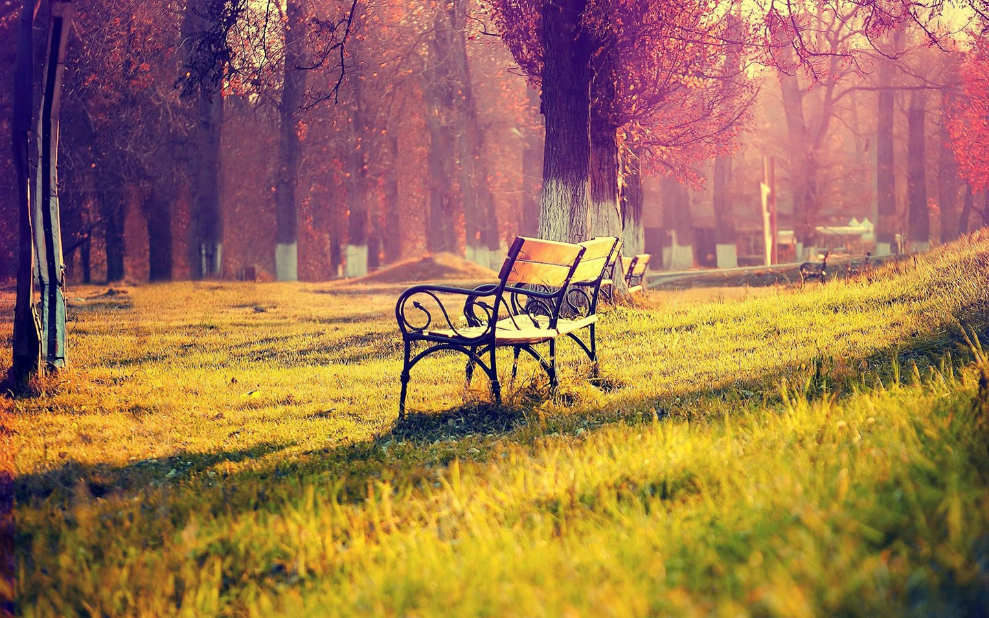 Pretty Park Bench Wallpaper