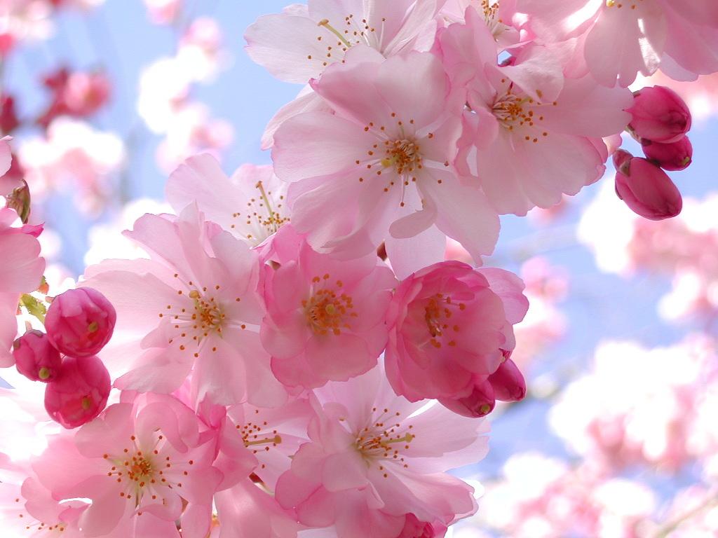 Pretty Pink Flower Wallpaper