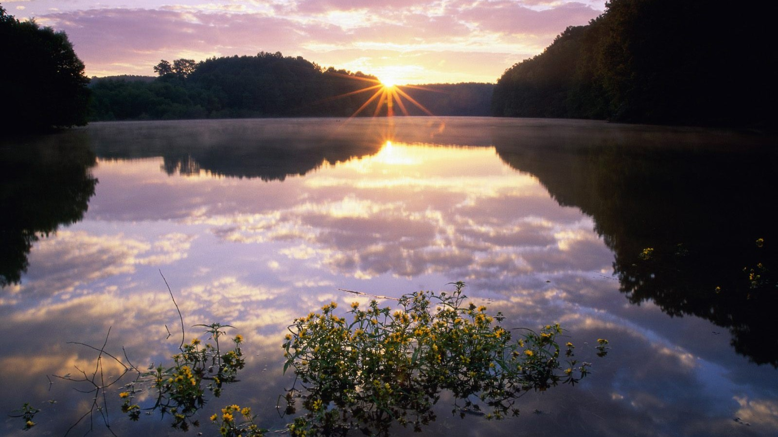 The river is mirror-like, and there is also flowers on the surface, the sun's rising, all of them compose quite a scene.