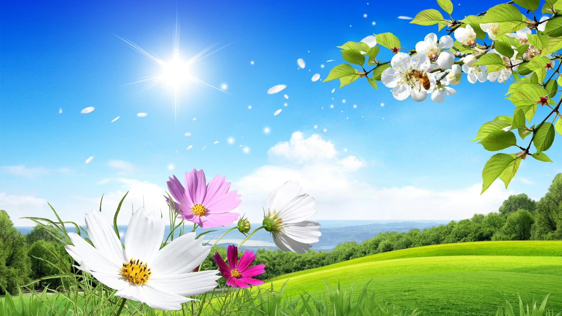 Pretty Summer Screensavers 21535 2560x1600 px