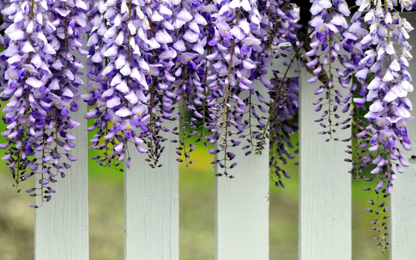 Pretty White Fence Wallpaper