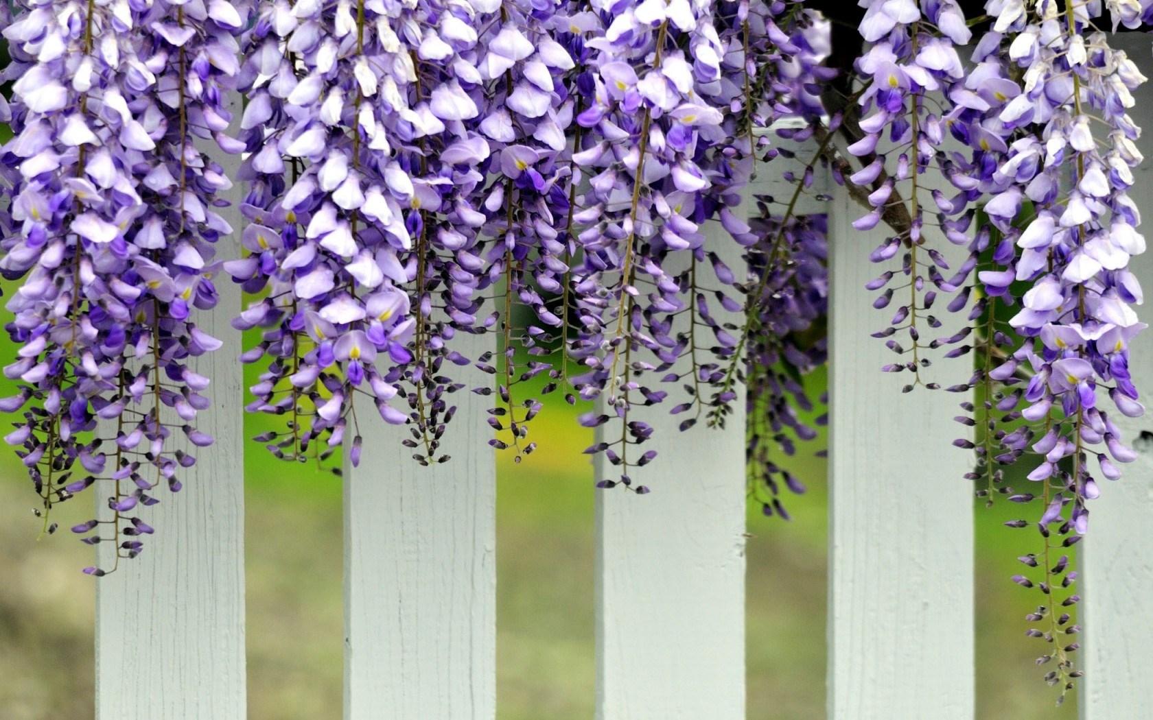 Pretty White Fence Wallpaper