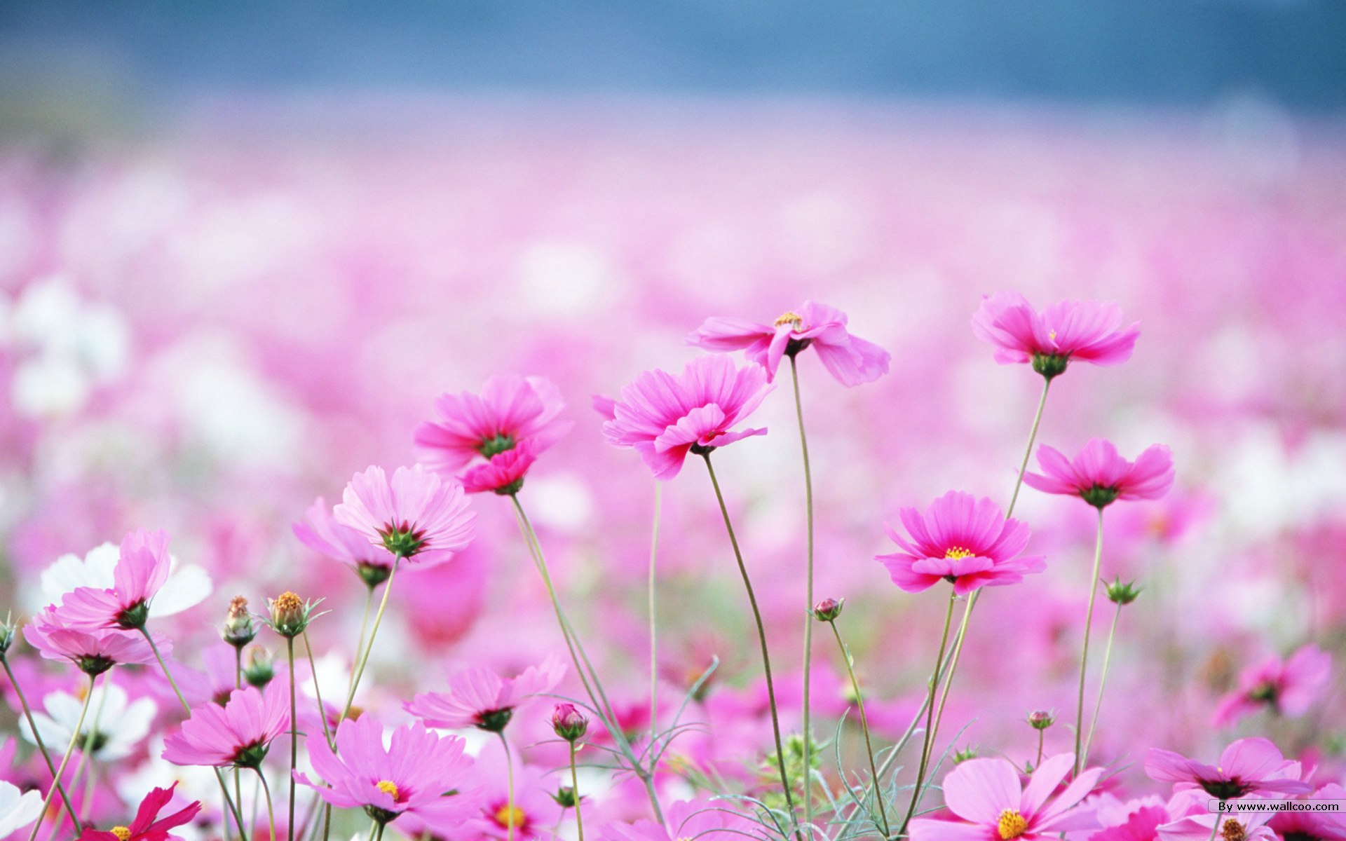 Pretty Wildflower Wallpaper