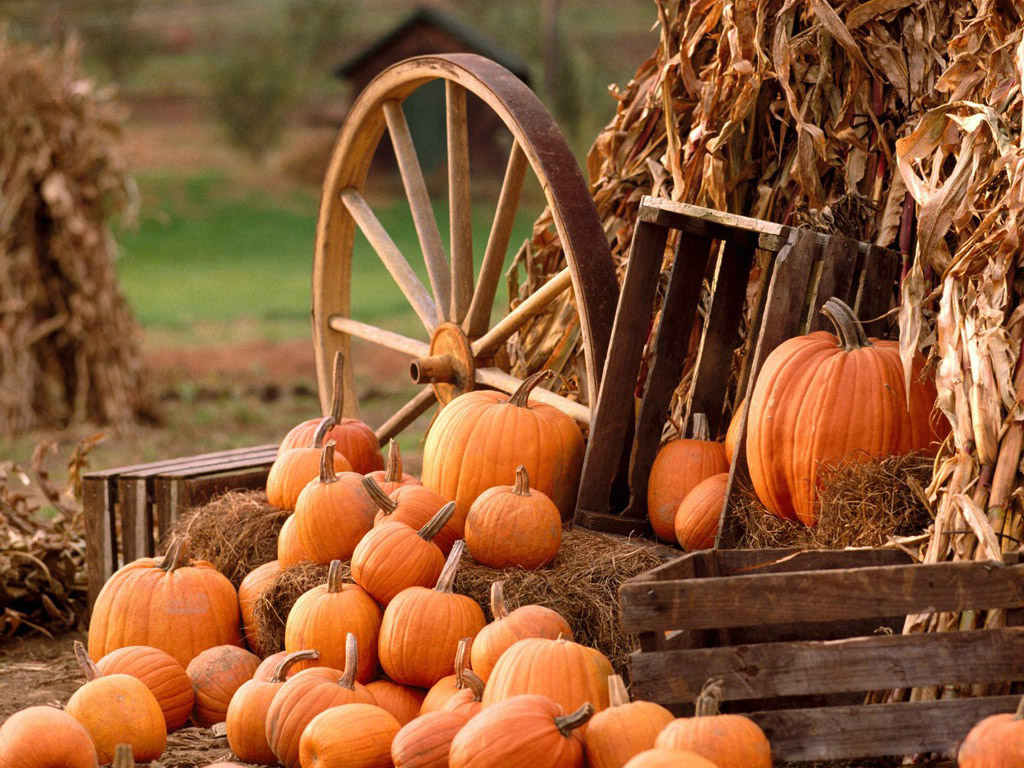 Desktop Wallpaper · Gallery · Miscellaneous Pumpkin Fest