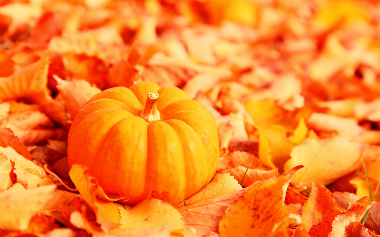 Little Pumpkin with Fallen Orange Autumn Leaves