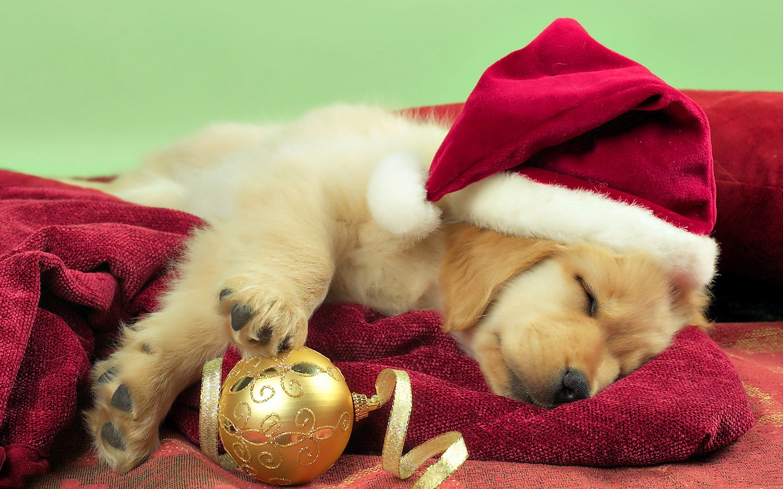 Puppy Christmas Gift