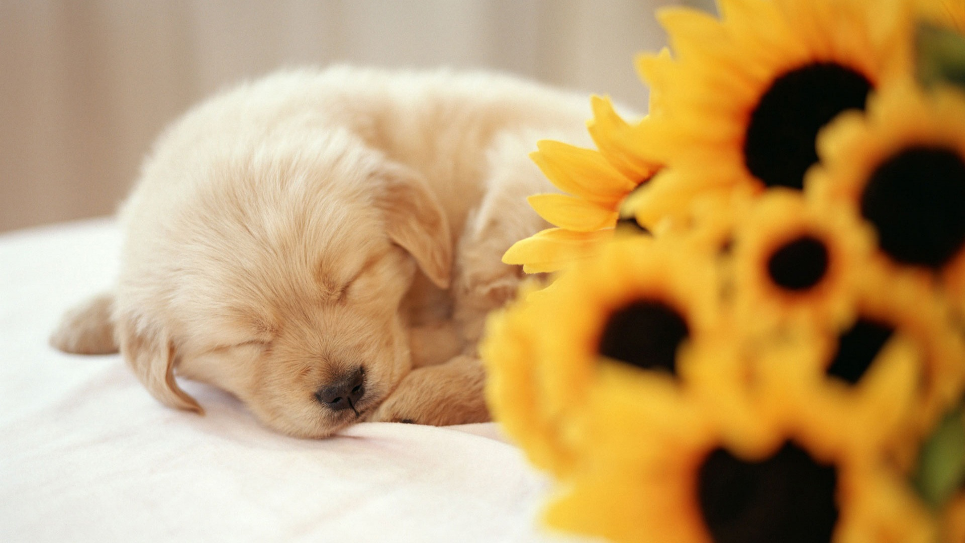Puppy wallpaper | 1920x1080 | #46576