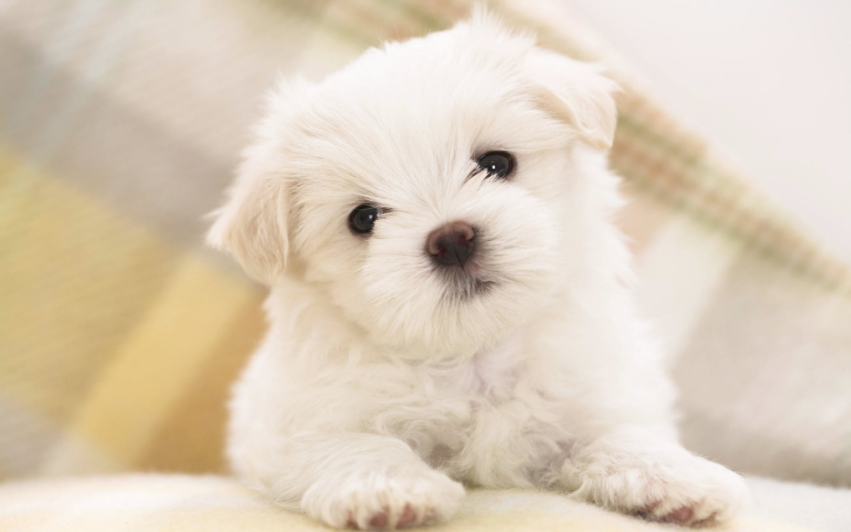 Beautiful Puppy Wallpaper