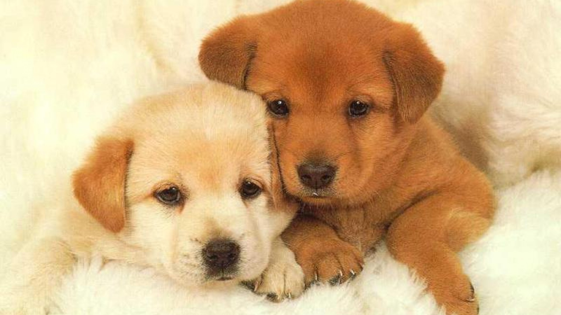 Puppy wallpaper | 1920x1080 | #46573
