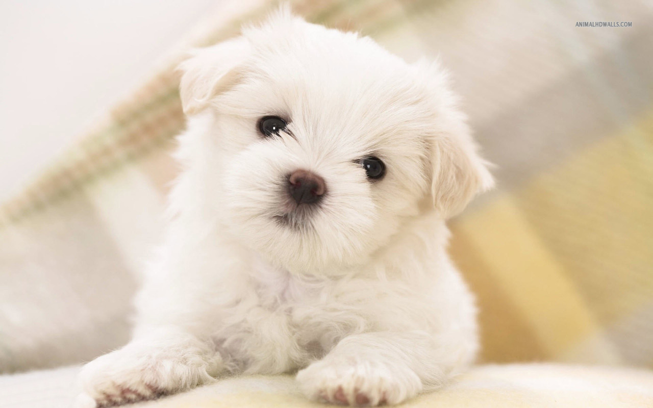 Puppy Wallpaper