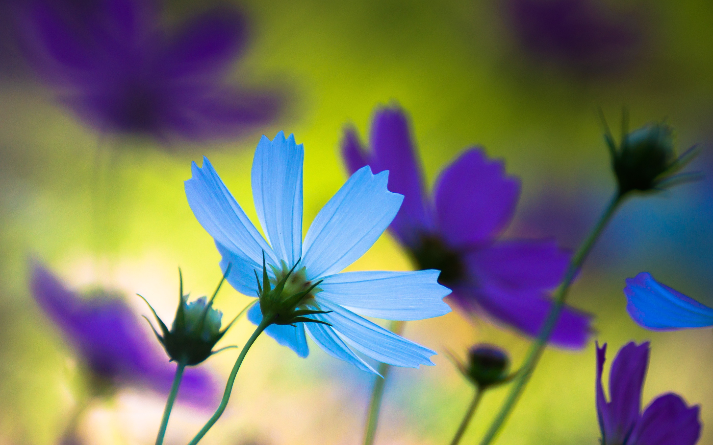 Purple blue flowers