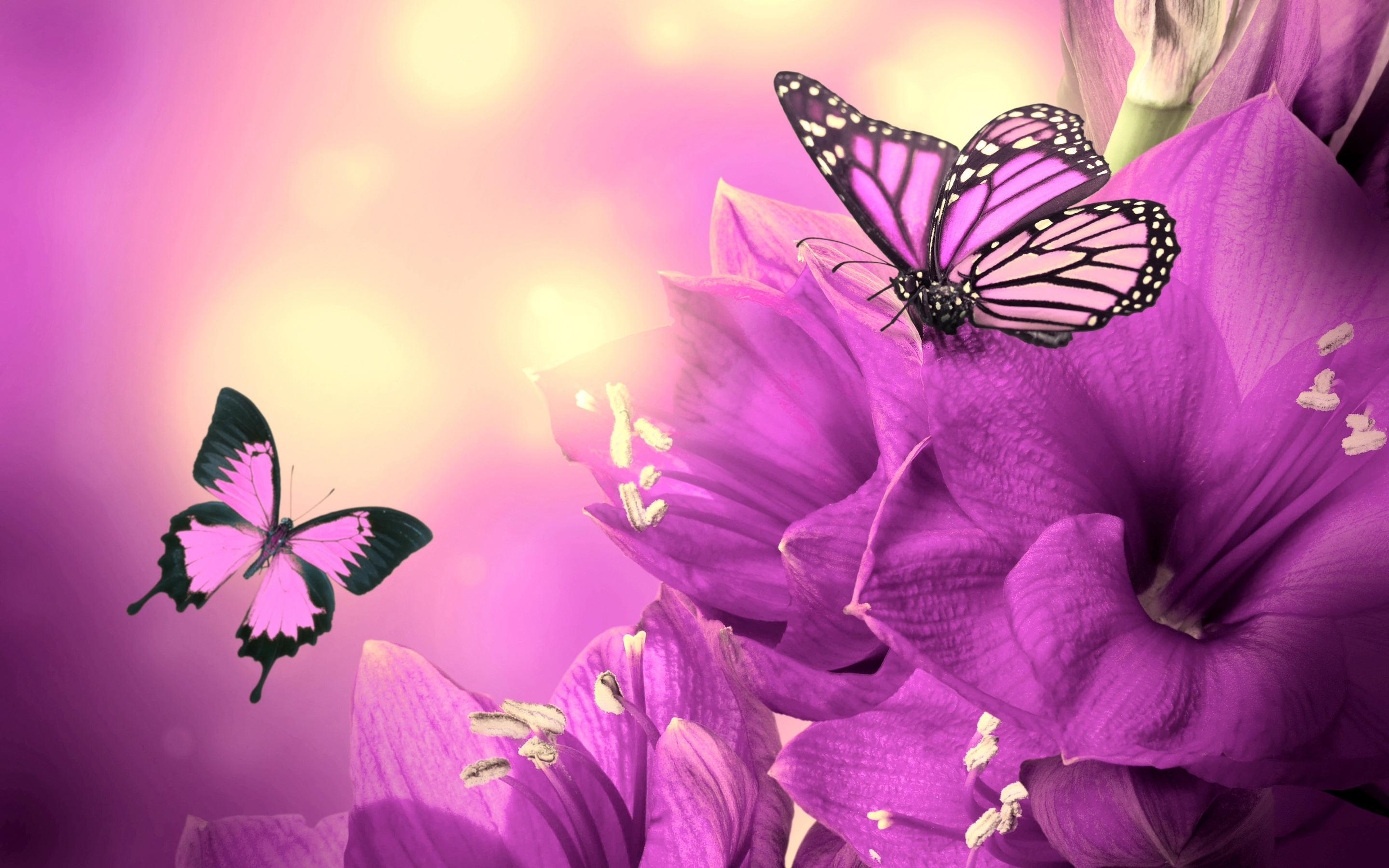 Image for Pink And Purple Butterfly Wallpaper