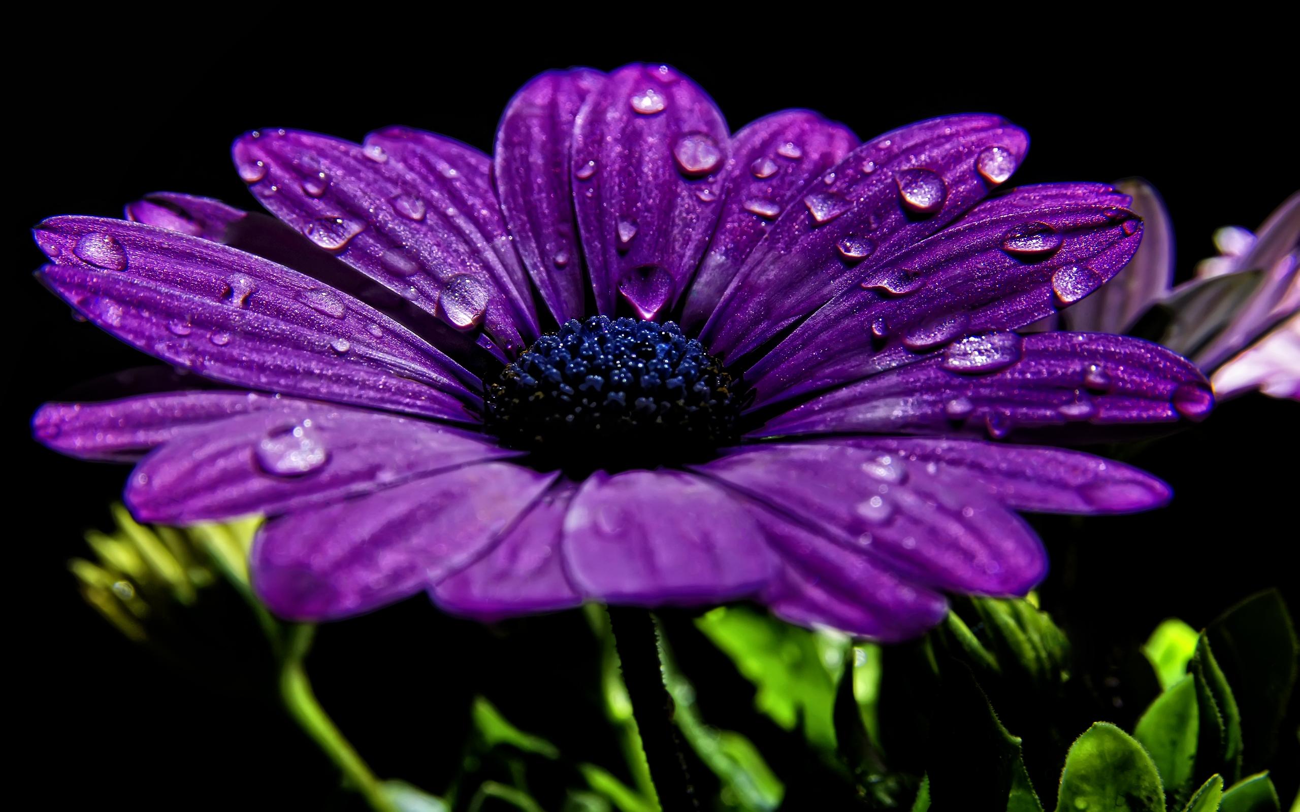 Purple flower Wallpapers-1
